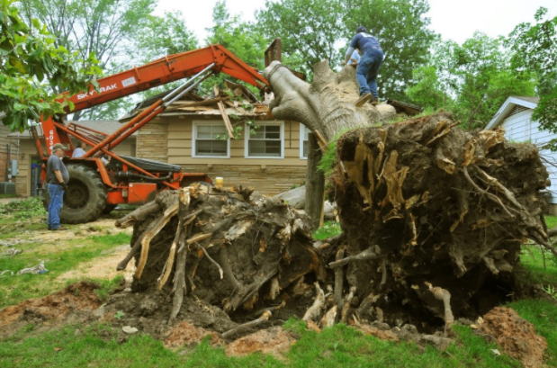 Remove Tree Stumps
